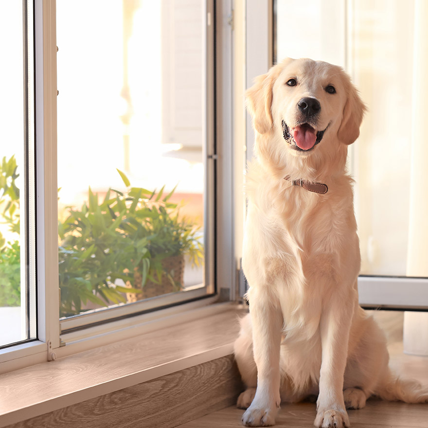 Stafford Texas Pet Screens for Doors and Windows