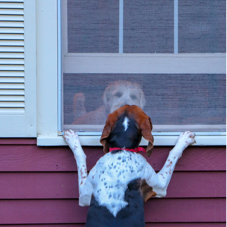 Stafford Texas Pet Resistant Screens for Doors and Windows
